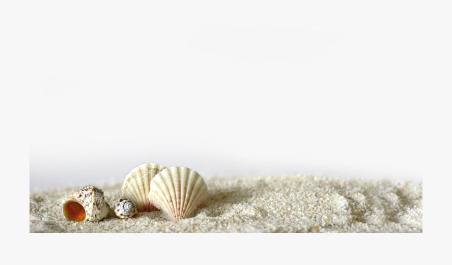 Concha Light La Of Sand Shell Seashell Clipart.