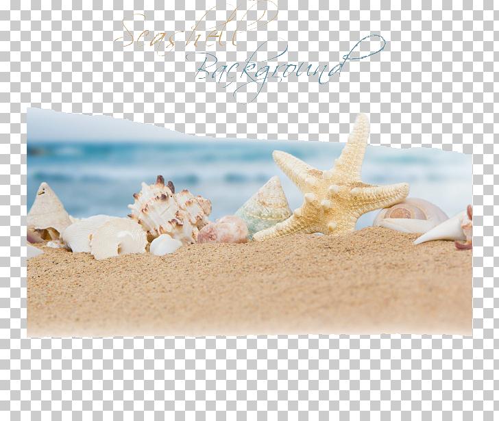 Beach Sand Ocean Seashell, Ocean Beach, white and brown.