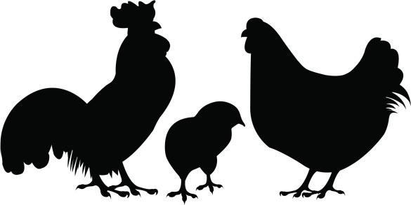 Chicken Silhouette Clip Art & Chicken Silhouette Clip Art Clip Art.