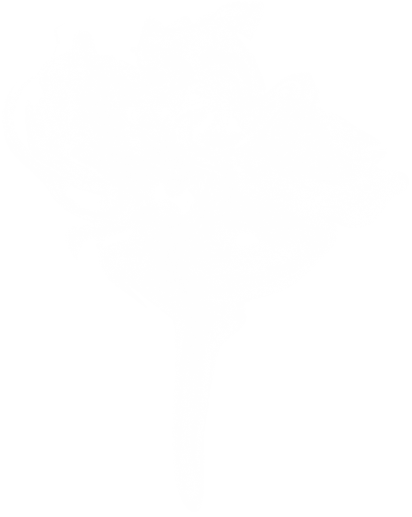 10 White Smoke (PNG Transparent).