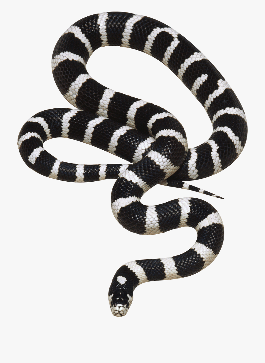 Black And White Snake Clipart.