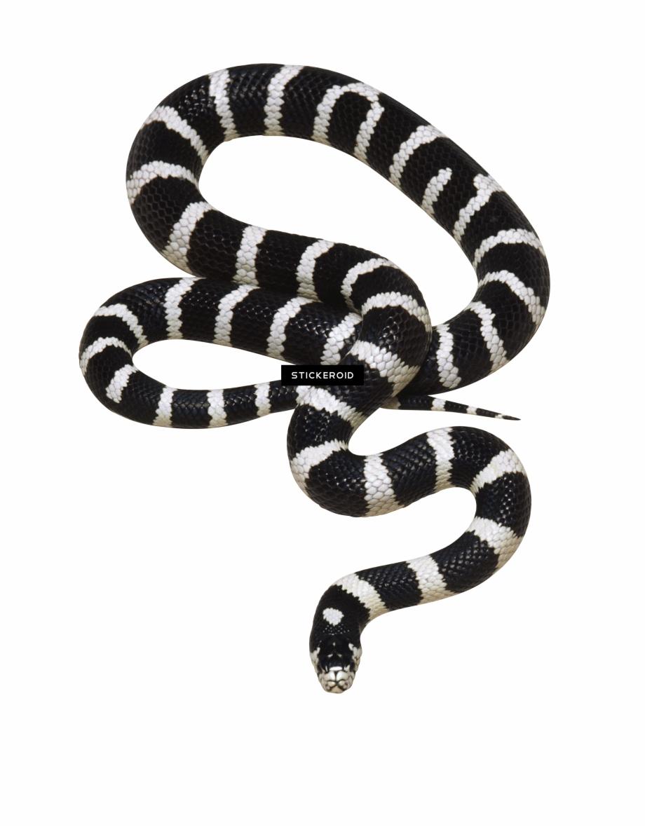 Transparent Background Png Snake , Png Download.