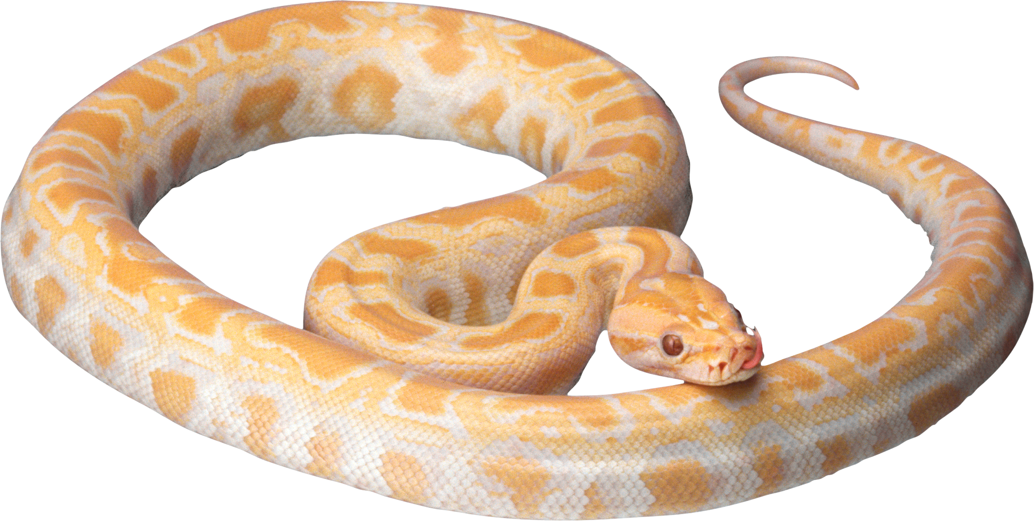 White snake PNG image picture download free.