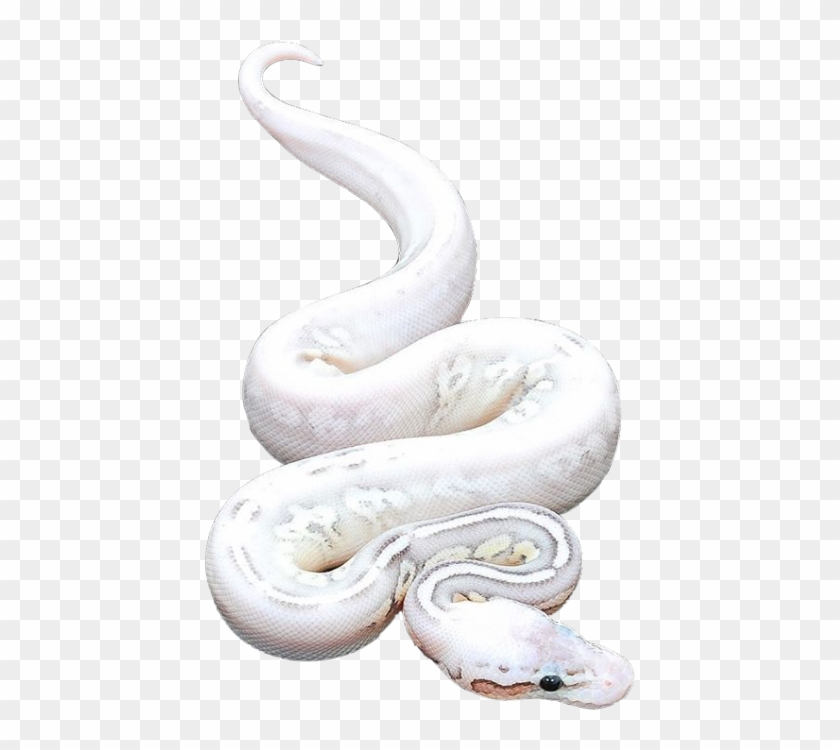 Snake Png.