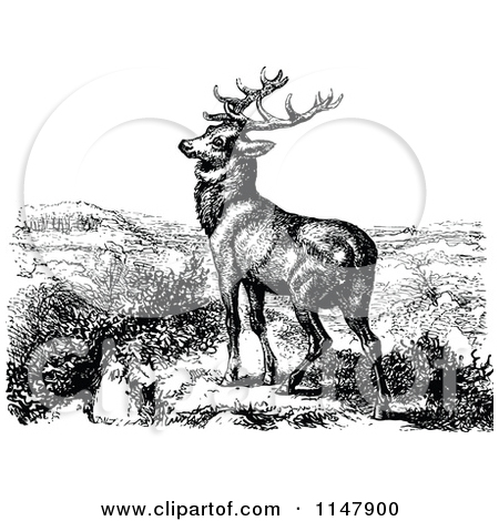 Clipart of a Retro Vintage Black and White Stag Deer.
