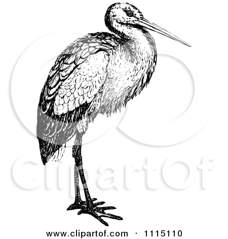 Clipart Of A Retro Vintage Black And White Stork.