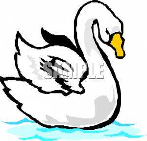 Art Image: A White Swan Stretching Its Wings.