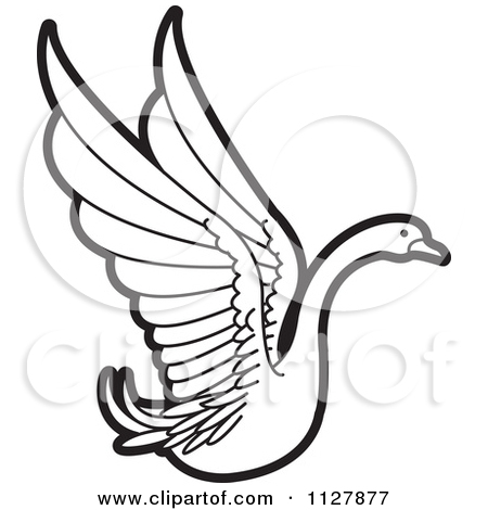 Clipart Of A Black And White Swan Flying 1.