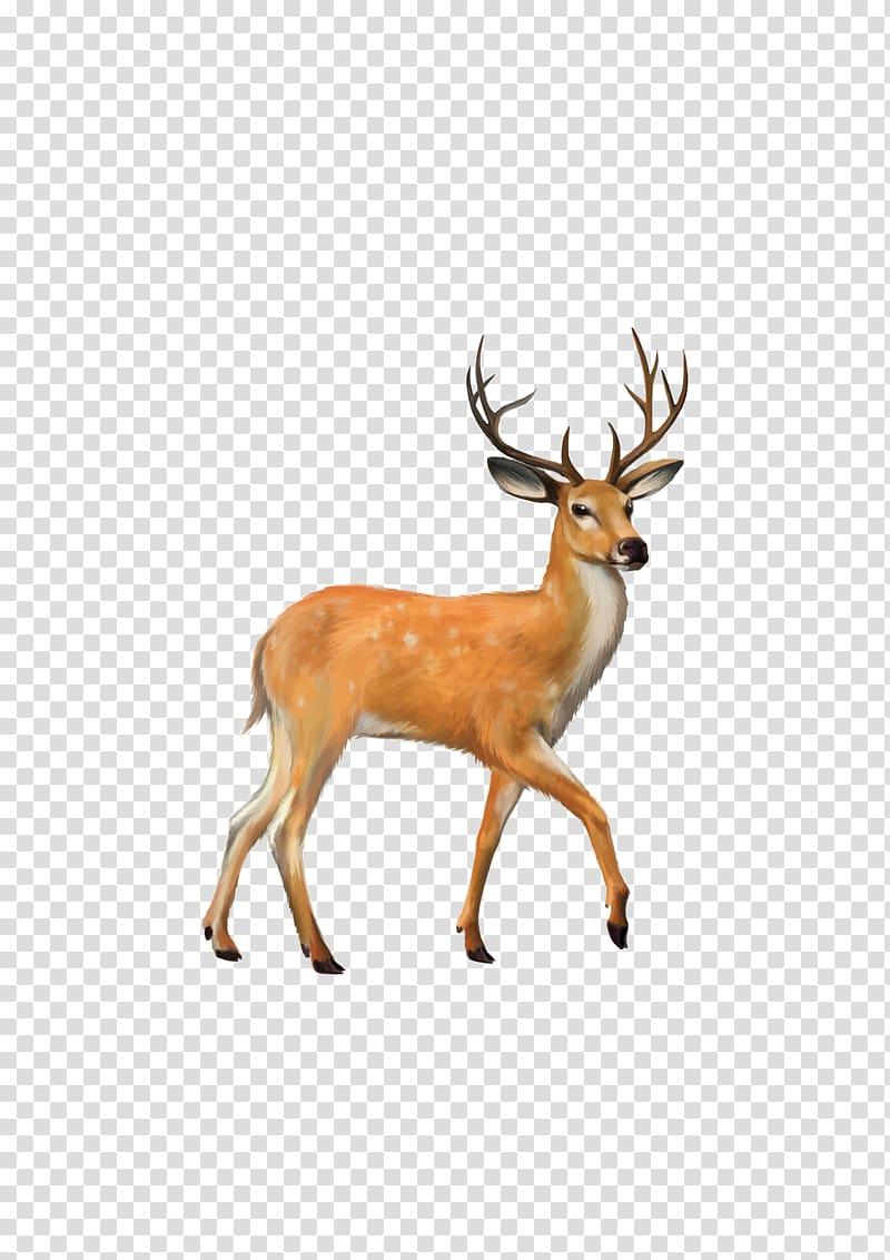 Brown deer , White.