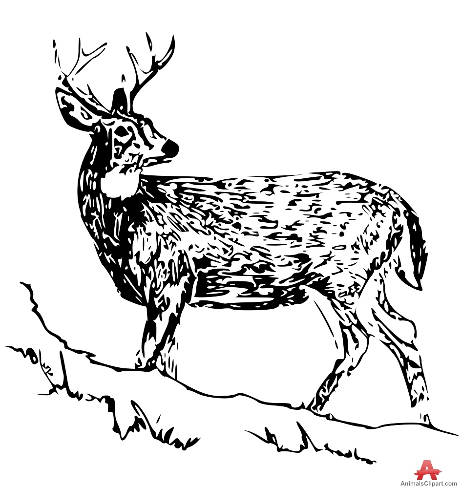 Clipart of White Tailed Deer.