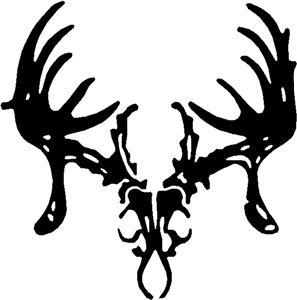 White Tailed Deer Skull.