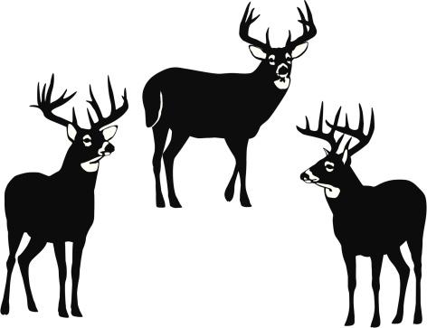 White Tailed Deer Clip Art.