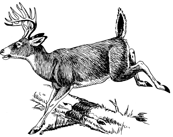 Whitetail Deer Jumping Clipart.