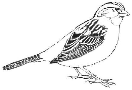 Sparrow Clipart Black And White image tips.