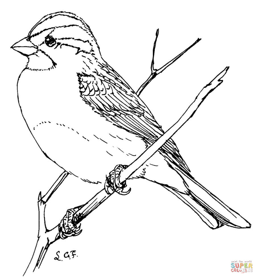 White Throated Sparrow coloring page.
