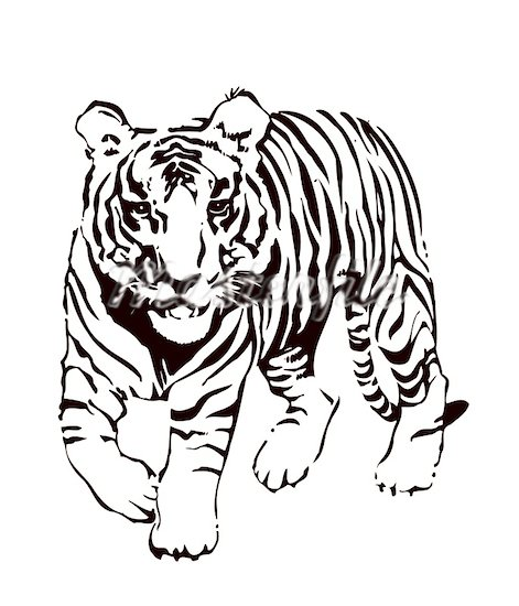 Tiger Face Clip Art Black And White.