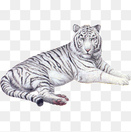 White Tiger Png, Vector, PSD, and Clipart With Transparent.