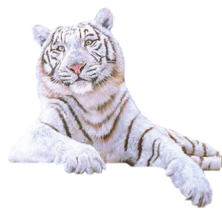 Download WHITE TIGER Free PNG transparent image and clipart.