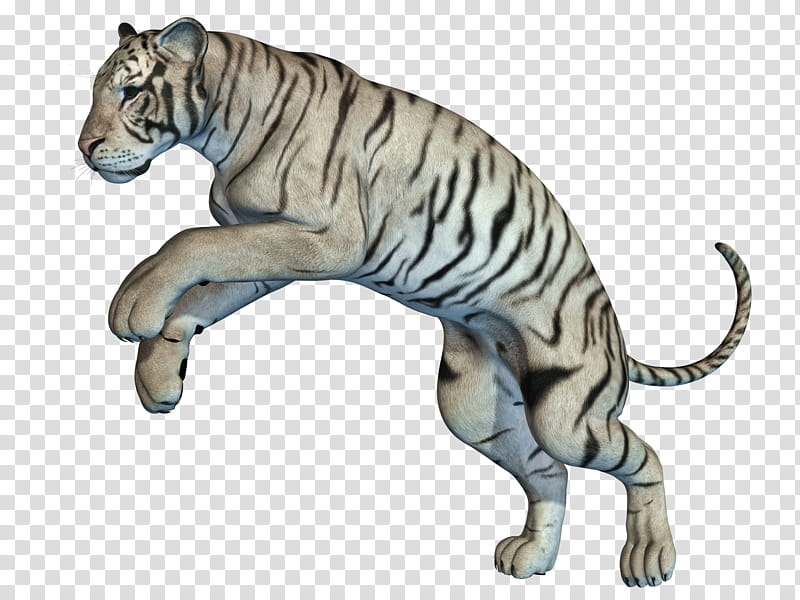 White Tiger , white and black tiger figurine transparent.