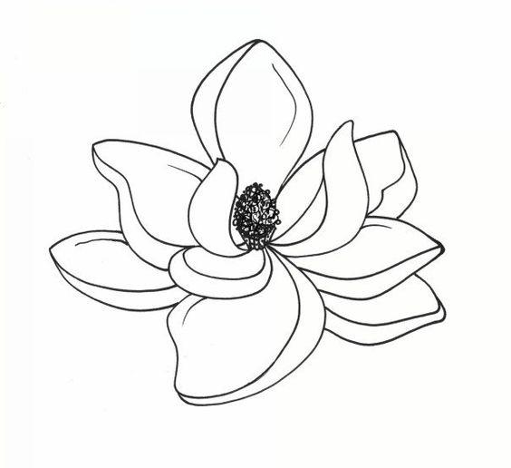 Botanical Illustrations by Meghan Witzke at Coroflot.com.