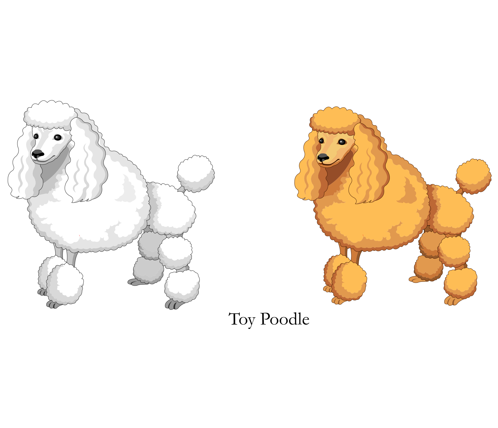 Vector Cartoon Yellow White Toy Poodle png download.