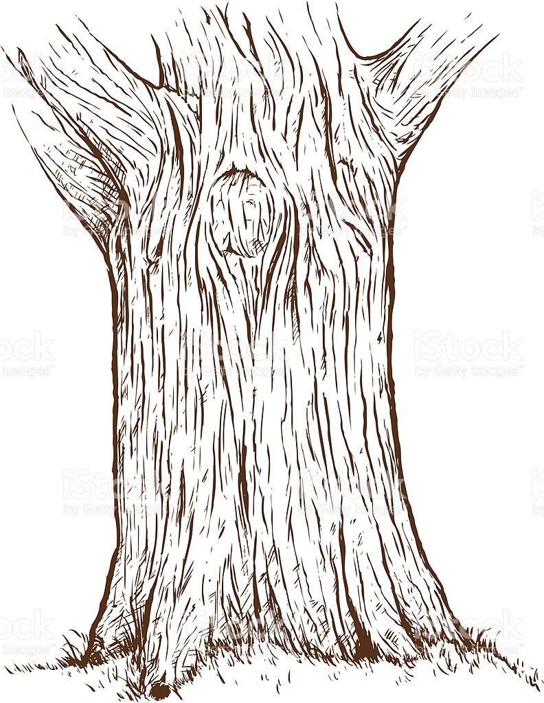 Tree bark clipart black and white clipart images gallery for.