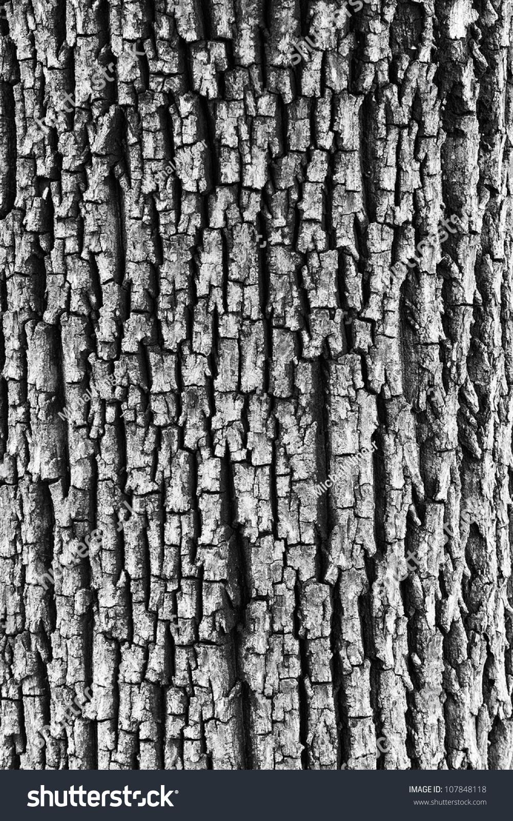 Tree Bark Clipart Black And White.