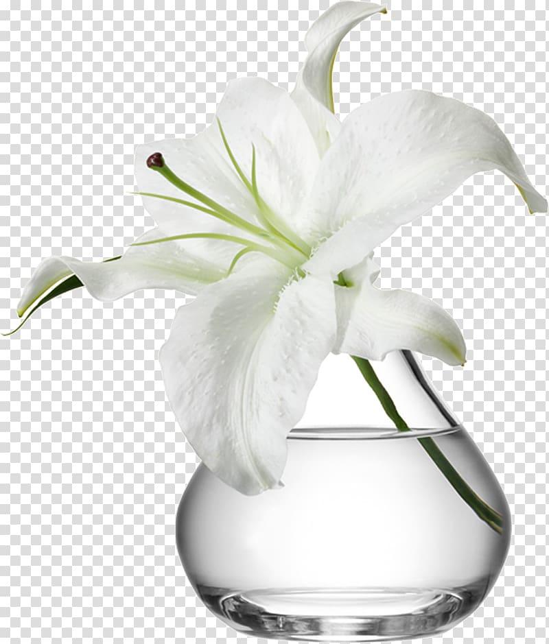White flower in clear glass vase , Vase Flowerpot Glass.