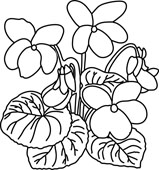 Violet Black And White Clipart.