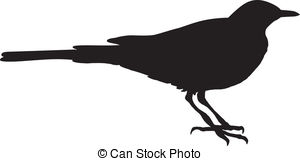 Wagtail Illustrations and Clip Art. 79 Wagtail royalty free.