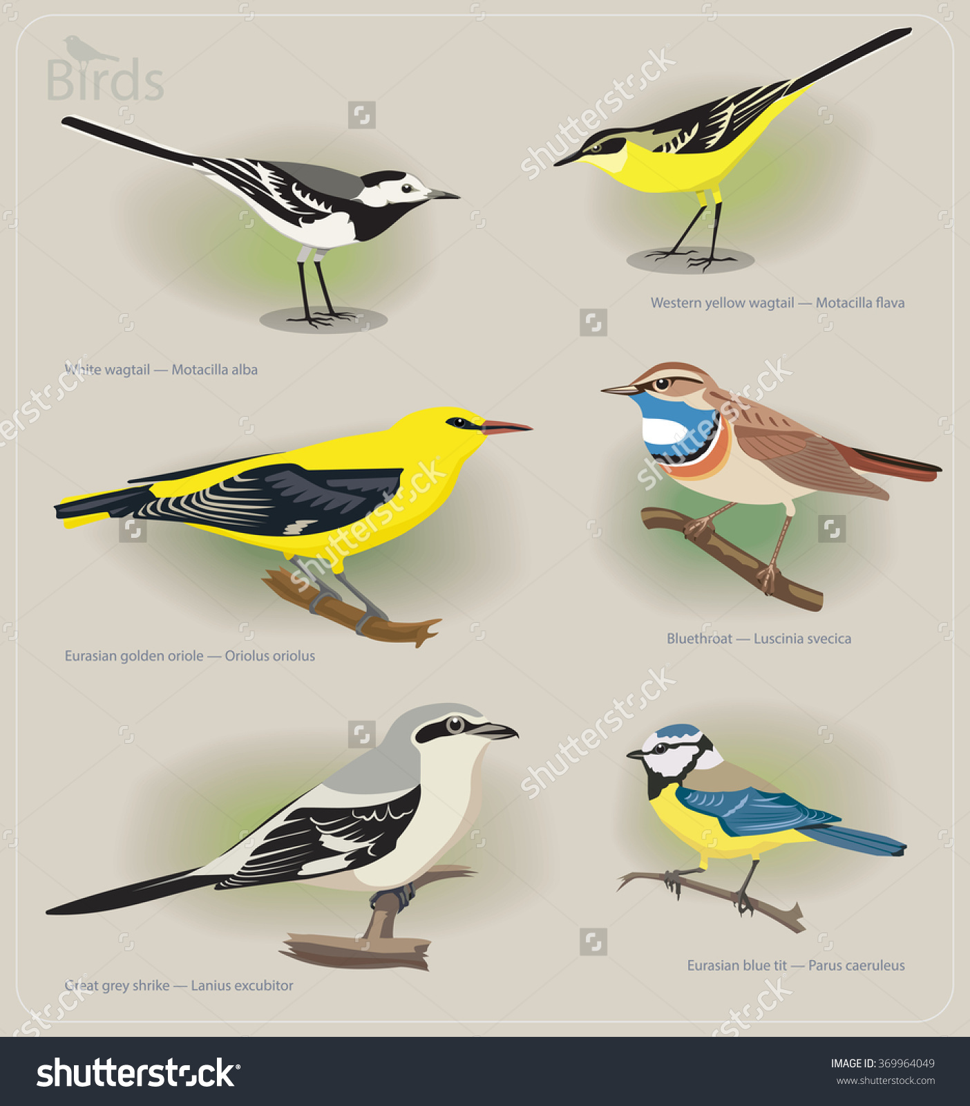 Image Set Birds White Wagtail Yellow Stock Vector 369964049.