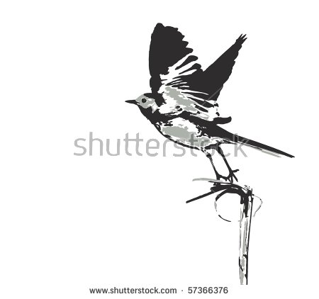 White Wagtail Stock Vectors & Vector Clip Art.