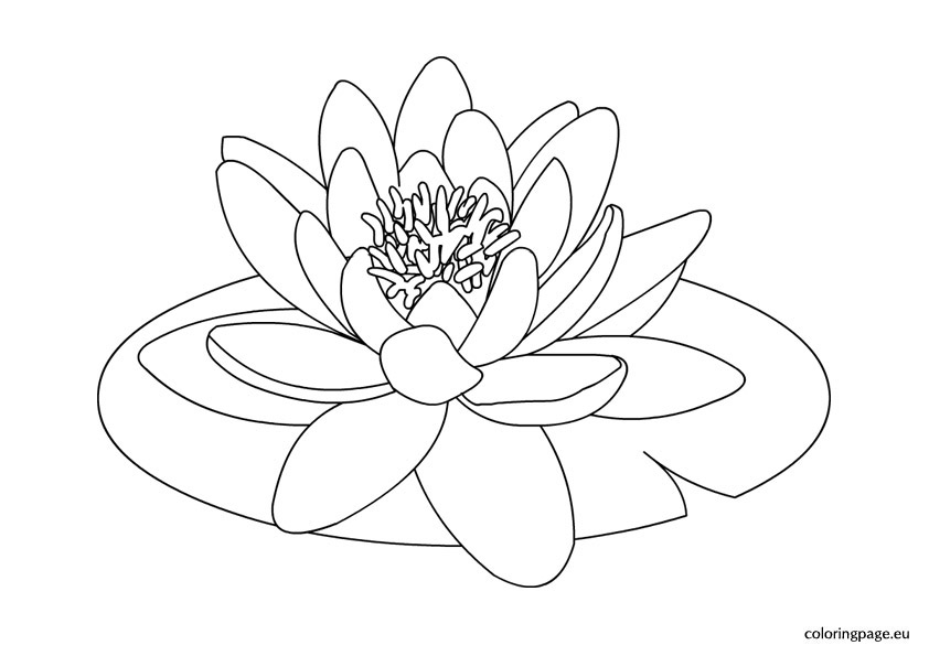 White water lilies clipart 20 free Cliparts | Download ...