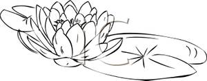 Black water lily clipart.