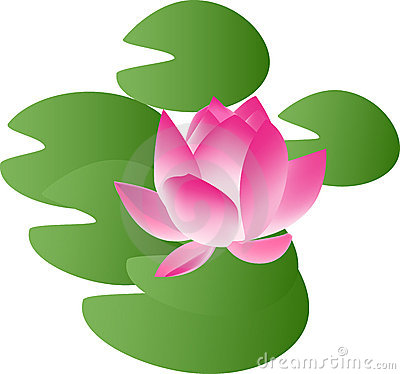 Whitewater Lily Clip Art.