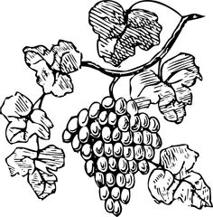 Drawings of grapes and vines.