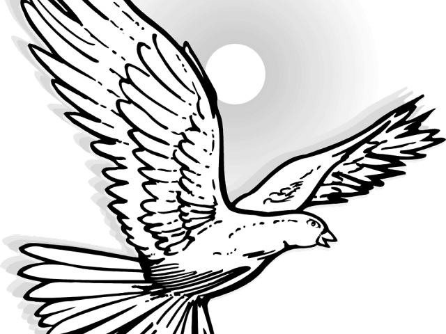 Mourning Dove Clipart White Winged.