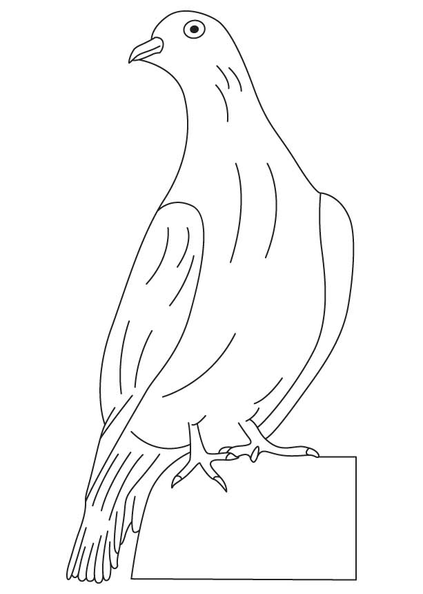 White winged dove coloring page.