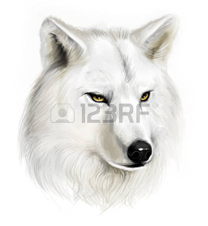 4,440 White Wolf Stock Vector Illustration And Royalty Free White.