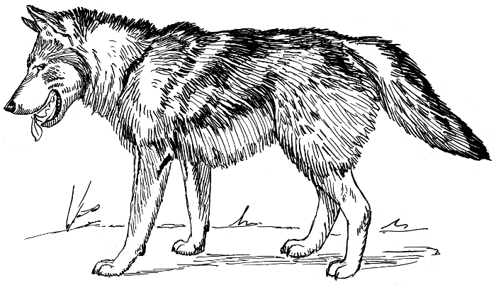 Free Black and White Wolf Clipart, 1 page of Public Domain Clip Art.