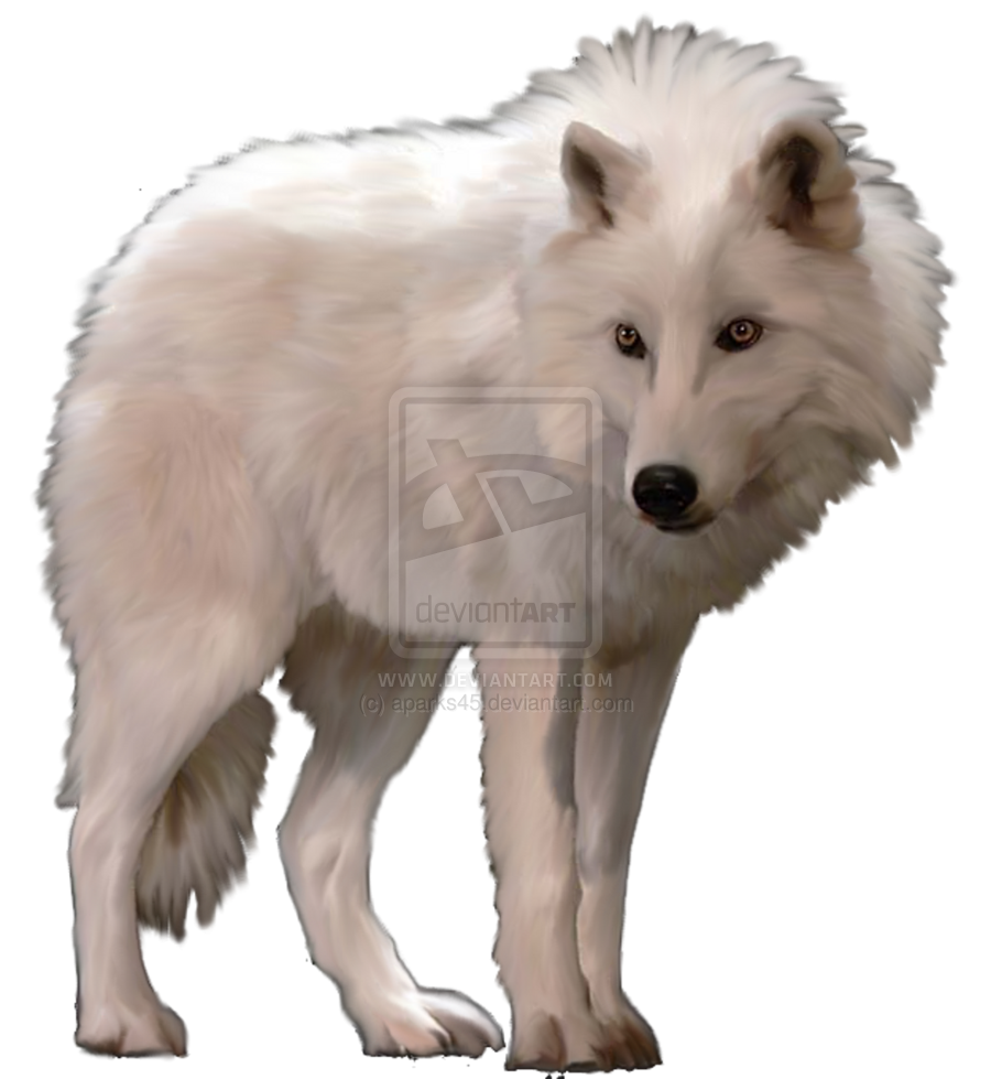 White Wolf With Blue Eyes Pictures.