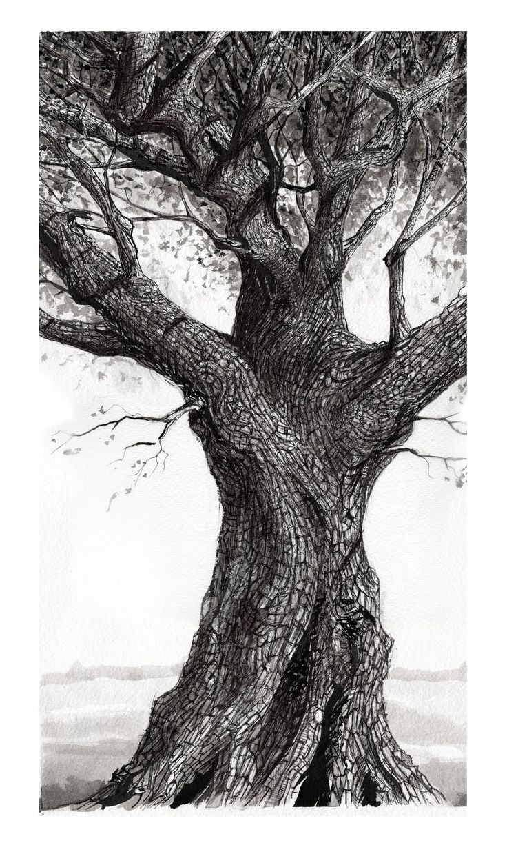 1000+ ideas about Tree Illustration on Pinterest.