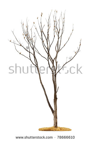 Withered Tree Stock Images, Royalty.
