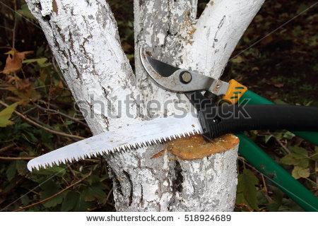 Tree Grafting Stock Photos, Royalty.