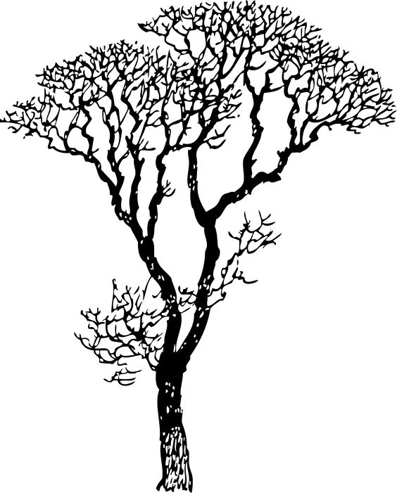 Bare Tree Black White Line Art Coloring Book Colouring Letters.