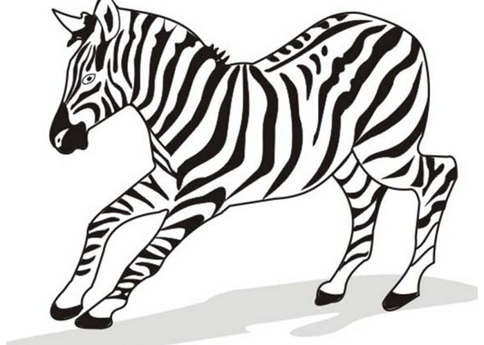 zebra outline.