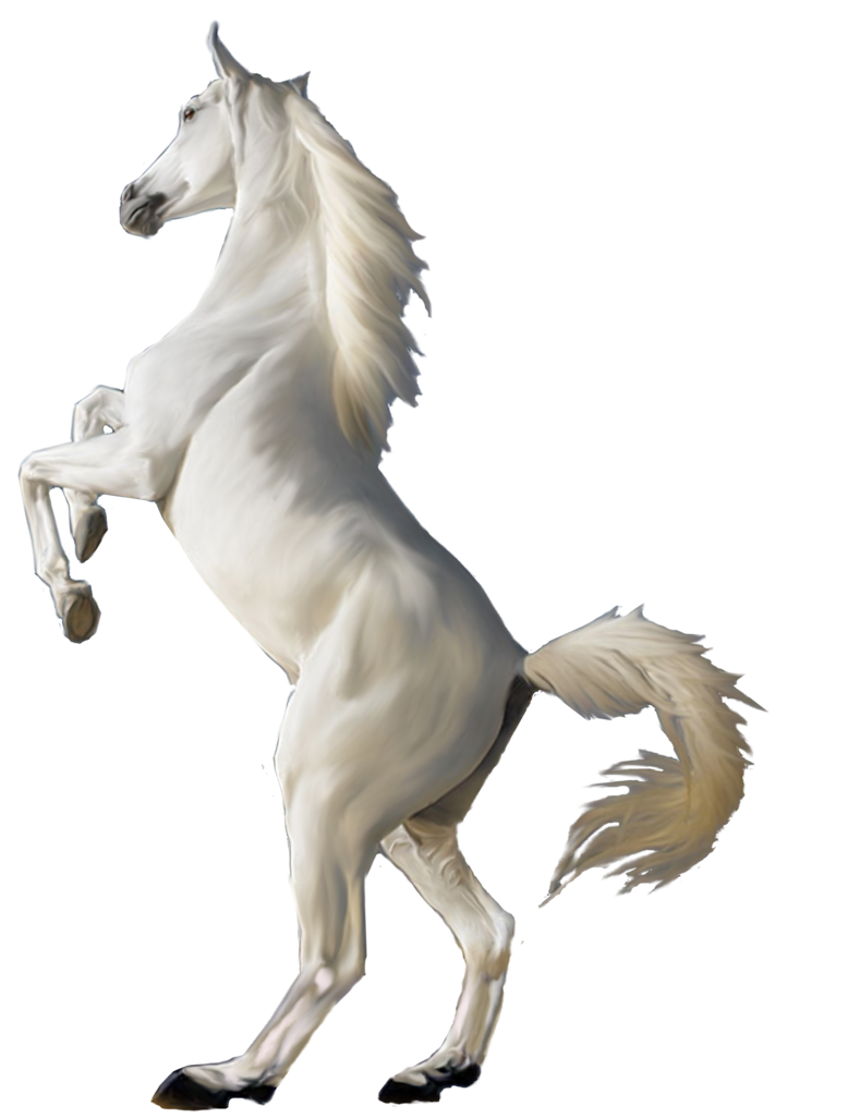White horse png image.