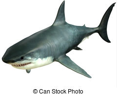 Great white shark Illustrations and Clipart. 1,008 Great white.