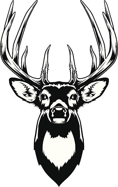 Best Whitetail Deer Illustrations, Royalty.