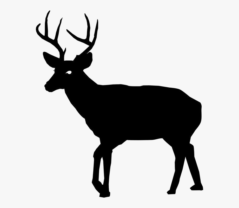 Buck Clipart Real Deer.